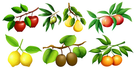 Different kind of fruits on branches