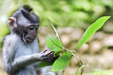 Wildlife Monkey Portrait