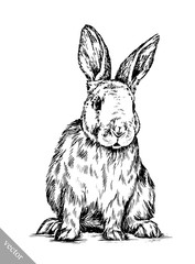 brush painting ink draw isolated rabbit illustration