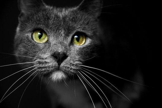 Mirada gato