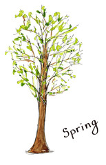 Sketch hand drawn watercolor season spring tree with lettering isolated