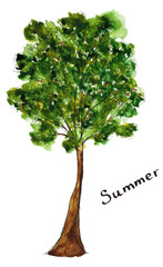Sketch hand drawn watercolor season summer green tree with lettering isolated
