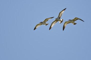 Three Ring-Billed Gulls Flying in a Blue Sky