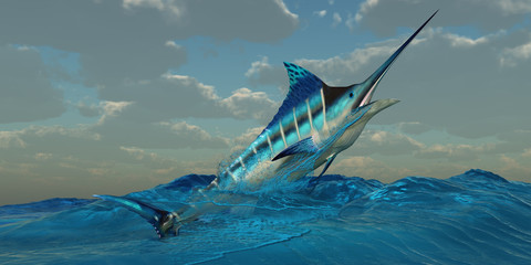 Blue Marlin Burst -The Blue Marlin is a predator and is a favorite game fish with deep sea anglers.