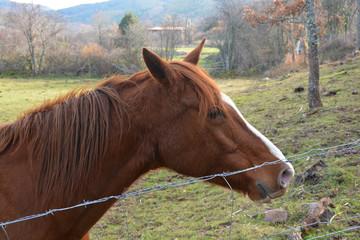 caballo en un prado verde