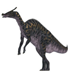 Saurolophus Dinosaur on White - Saurolophus was a Hadrosaur herbivorous dinosaur that lived in Mongolia, Asia in the Cretaceous Period.