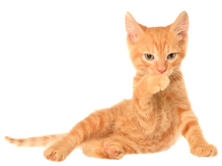 Orange kitten lays and lick