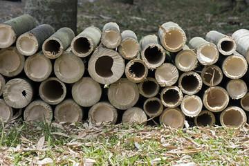 Giant bamboo sawed