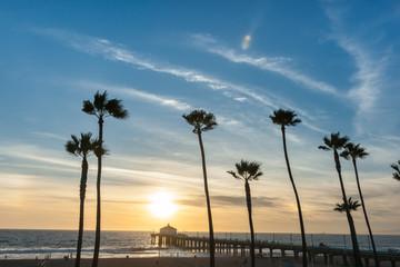 Tropical palms along Californian beaches.