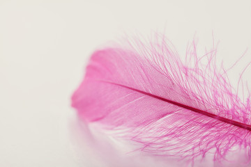 Tender feather on light background for your design, pink color, copy space for text