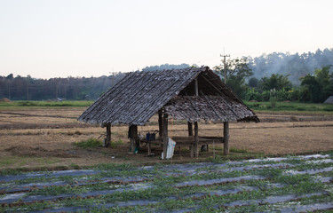 wooden hut in the farm