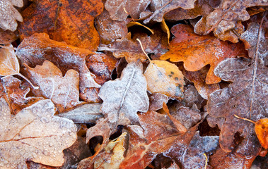 Abstract autumn background, frozen leaves, small depth of field