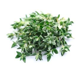 Thyme herbs close