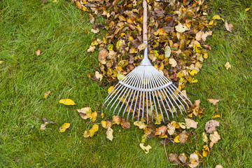 Autumn leaves cleaning on green lawn