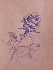 purple rose drawing