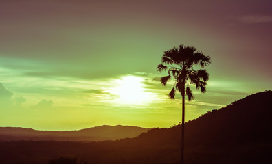 Palm and sunset. Vintage style photo.
