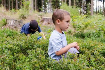 Children picking blueberries