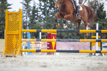 Rider jumping with horse