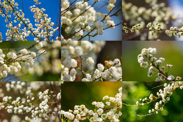collage of small flower on spring backgrounds