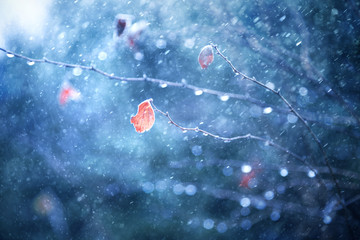 Lovely blurry tree branch with single orange red color leaf at snowfall. Frosty leaf and branch with snowfall. Beautiful dreamy blue color snowy winter season nature background. Selective focus used.