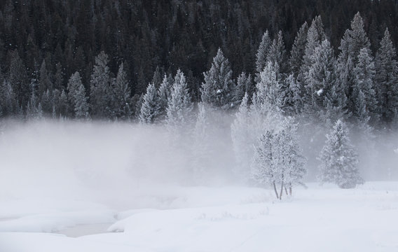 a cold frosted spruce forest with a foggy snowy creek in the foreground
