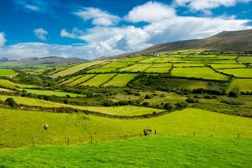 Landschaft mit Weiden in Irland