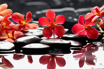 Wall Murals Spa Beautiful red orchid with therapy stones