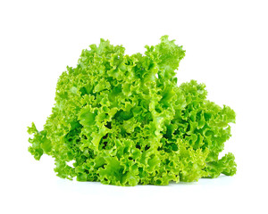 Fresh green lettuce isolated on a white