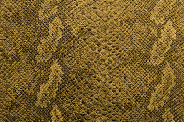 the texture of snake skin