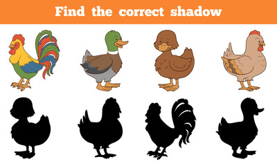 Find the correct shadow: farm animals (chicken and ducks)