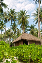 Bamboo hut on the tropical beach among lush green vegetation and coconut palm trees