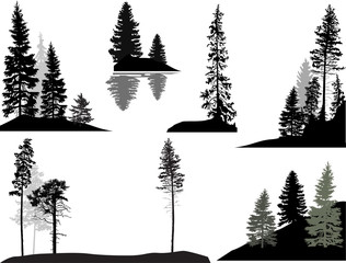 set of dark fir trees on white