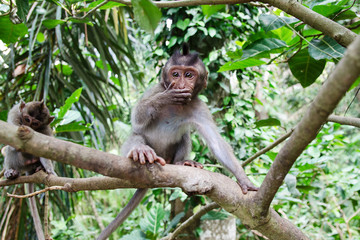 Surprised wild monkey - Stock image