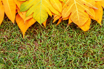 yellow leaves autumn leaf on green grass background