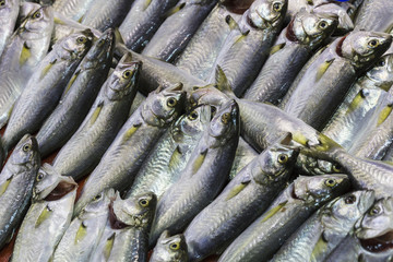 Fresh fish at the seafood market
