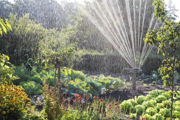 Bewässerung im Schrebergarten - Gegenlicht
