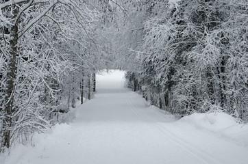 очаровательный снежный лес
