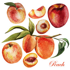 watercolor set with peaches on a white background.