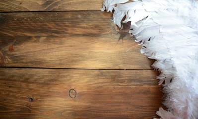 Background with white feathers