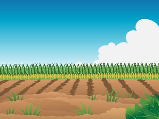 cartoon vector illustration of a crop field