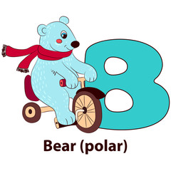Letter B - Bear polar. Alphabet with cute animals. Vector illustration