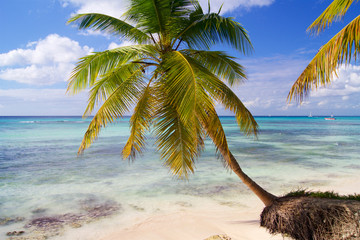 Palm tree leaning over the sea
