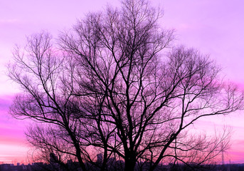 Silhouette of a big old tree on beautiful sunset violet background retro filtered