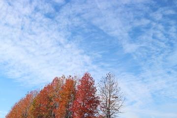 立川市の秋空