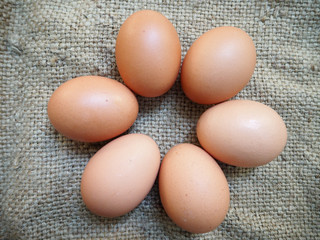fresh chicken egg brown color