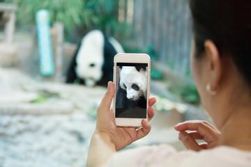 female taking panda photo