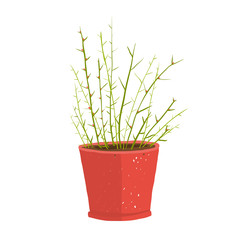 Delicate green indoor leafy plant in pot
