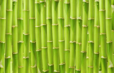 beautiful green bamboo background