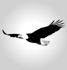 Vector silhouette flying eagle