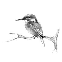 Kingfisher on branch 2. Watercolor bird
